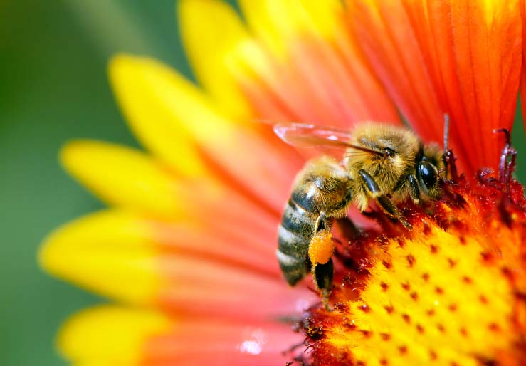 Campaign to Save Earth's Honey Bees!